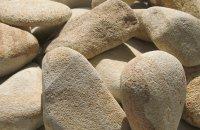 Piaskowiec Golden Sand